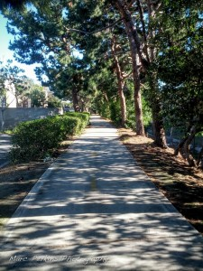 The path that leads from the Santa Ana River Trail to Sunflower Ave is tree-lined and nicely paved.